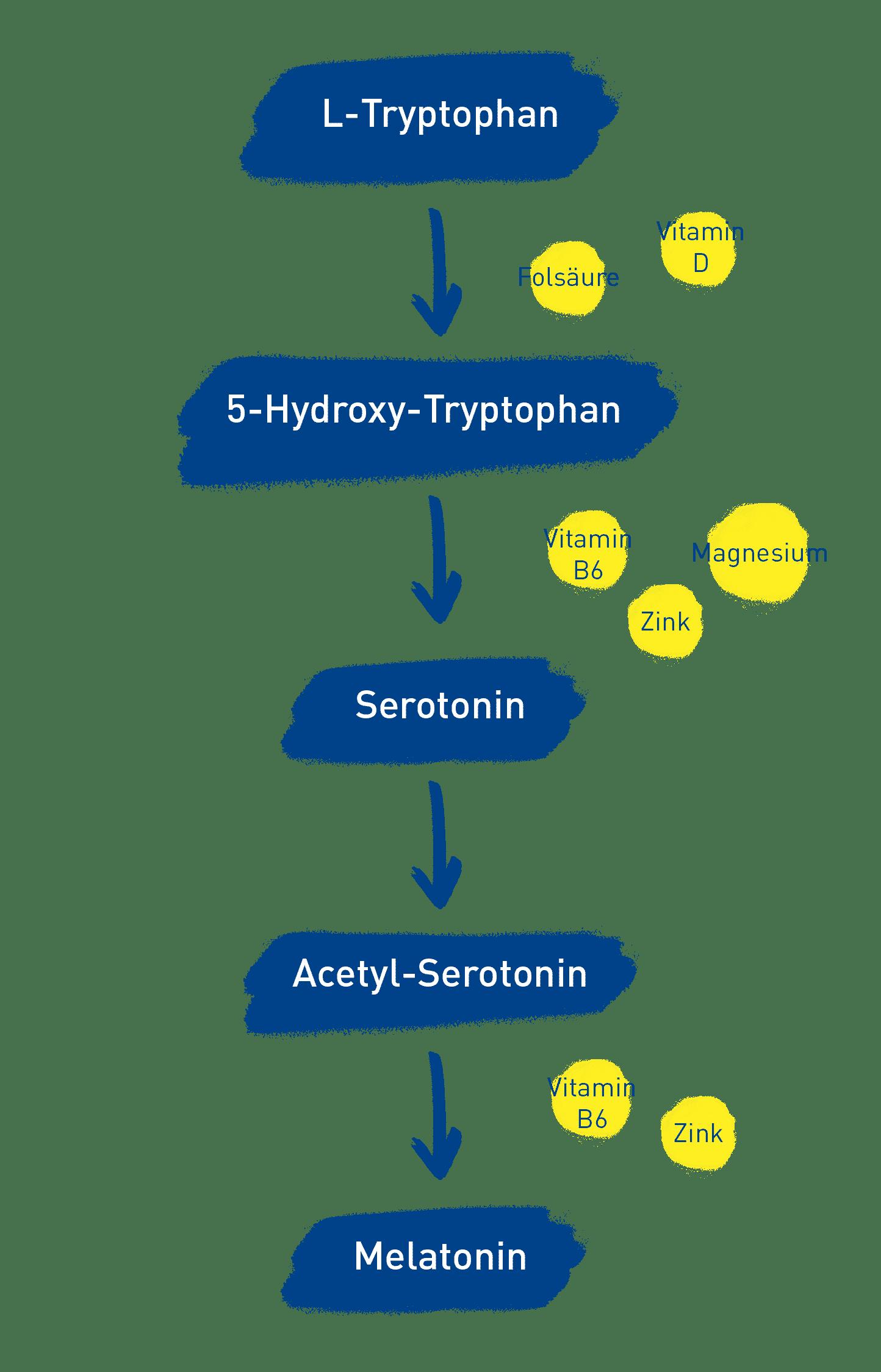 wie entsteht melatonin