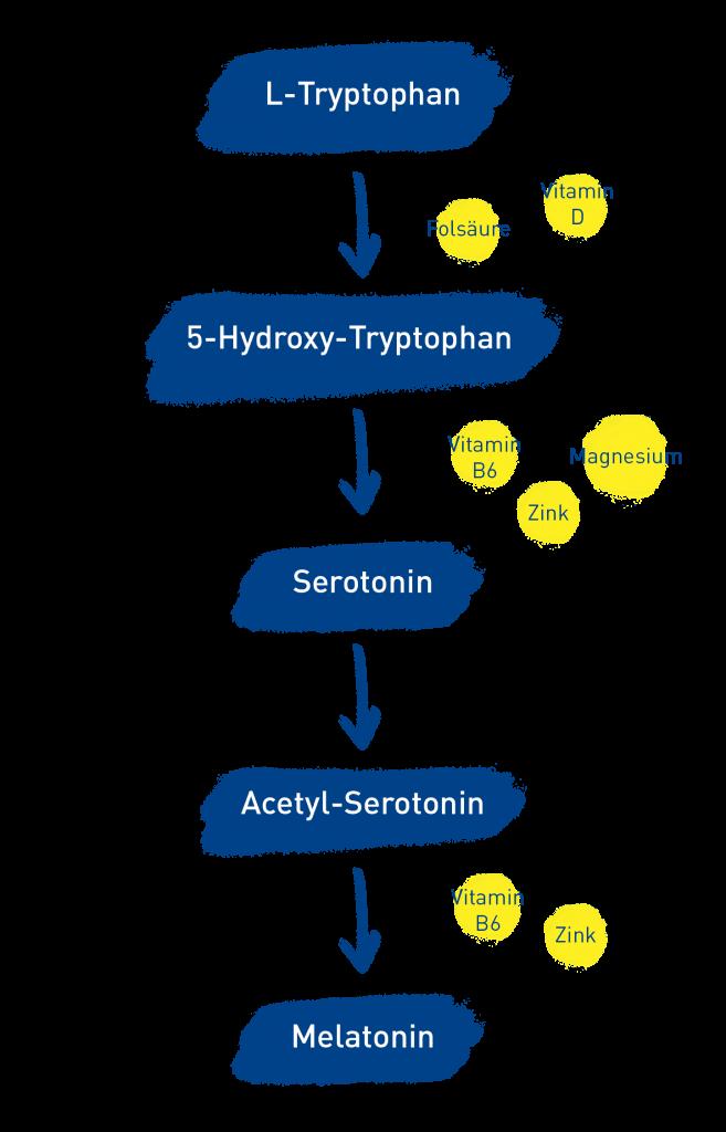 So entsteht Melatonin